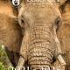 thumbnail of Loisaba Conservancy 2021-2025 Strategic Plan