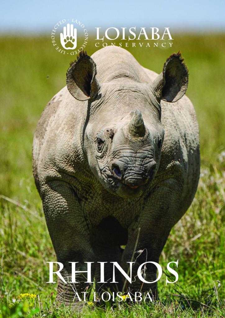 thumbnail of Rhinos at Loisaba